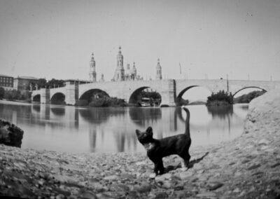 Pinhole Kitten