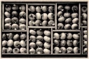 Pattern Onion - Guillermo Calero